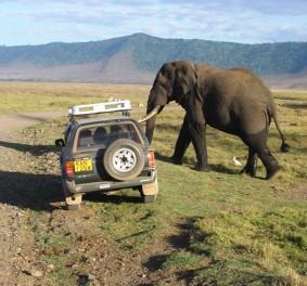 Safari tanzanie, façon originale de passer ses vacances
