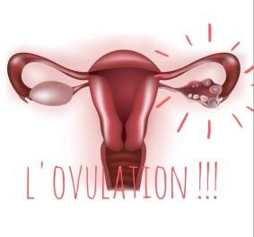 Calcul ovulation : savoir quel est le moment propice pour concevoir